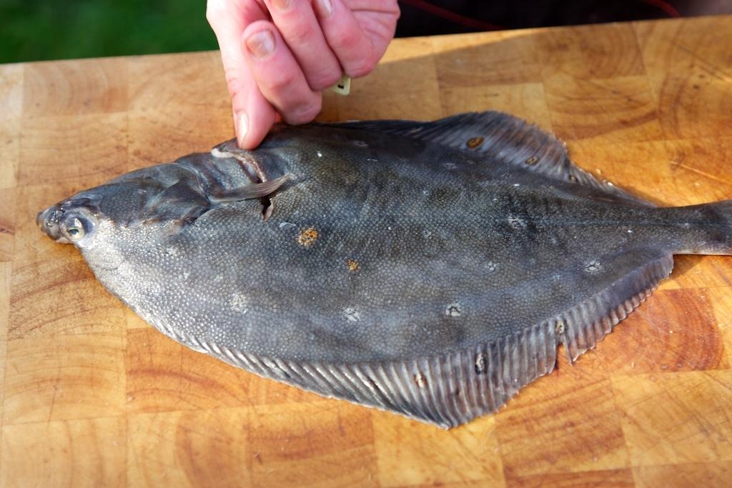 Uzení ryb