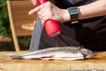 Ryby kupujeme nejlépe ve specializovaných obchodech nebo přímo na sádkách od rybářů. Tak máme jistotu, že máme ryby opravdu čerstvé s výbornou chutí.